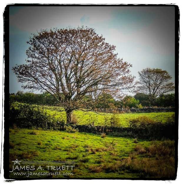 Ireland Autumn Trees in Meadow