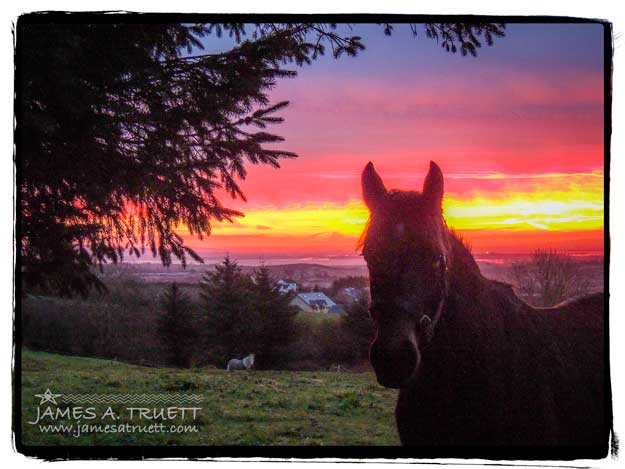 Horse in the meadow at sunrise