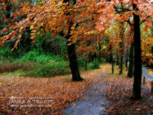 Autumn Entrance to Muckross House, Killarney
