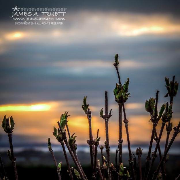 New Irish Spring growth at Sunrise