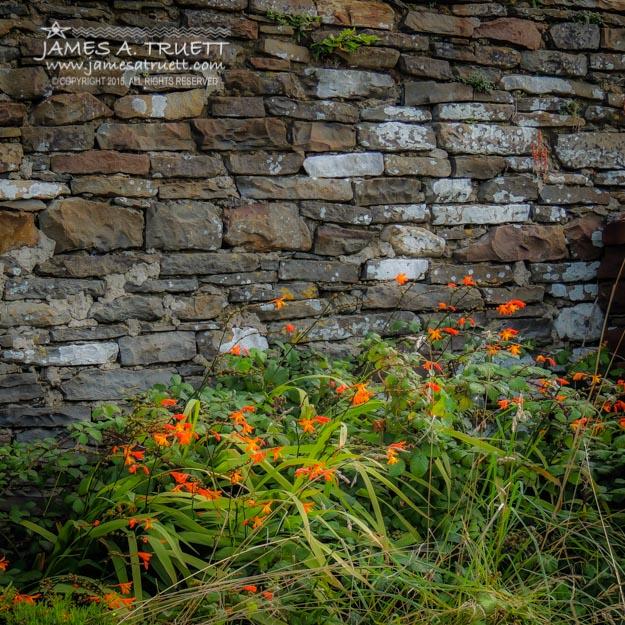 Orange Flowers in Irish Graveyard