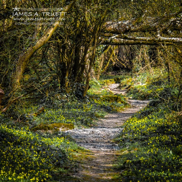 Path through Yeats' Fairy Forest at Ballylee, County Galway