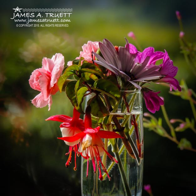 A collection of Irish summer flowers against the lush greenery of the County Clare countryside.
