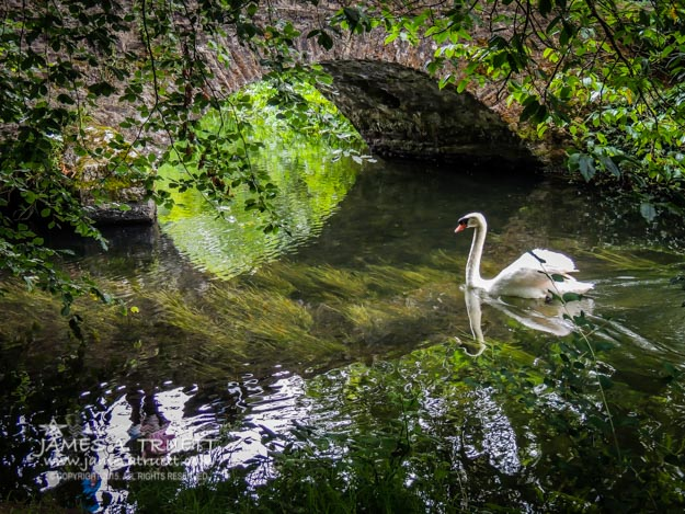 Arched Bridge and Swan At Doneraile Park