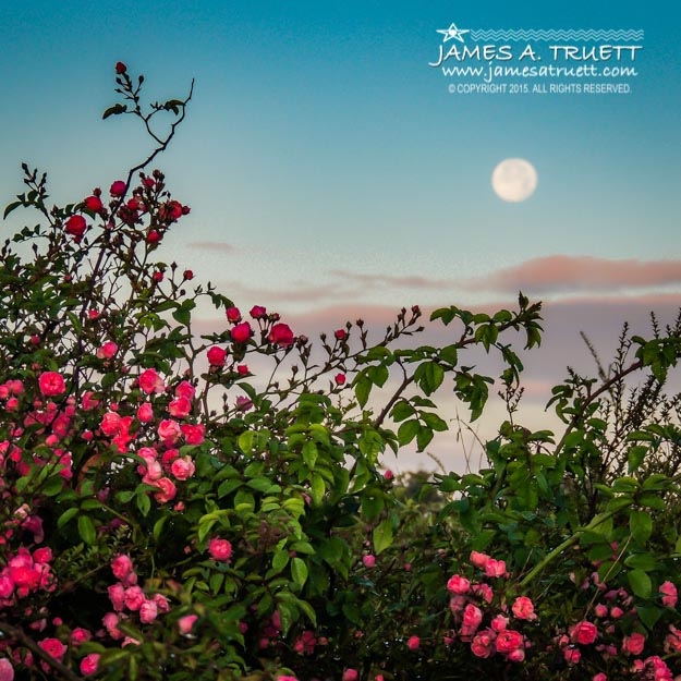 Full Moon Sets over Wild Irish Roses in County Clare