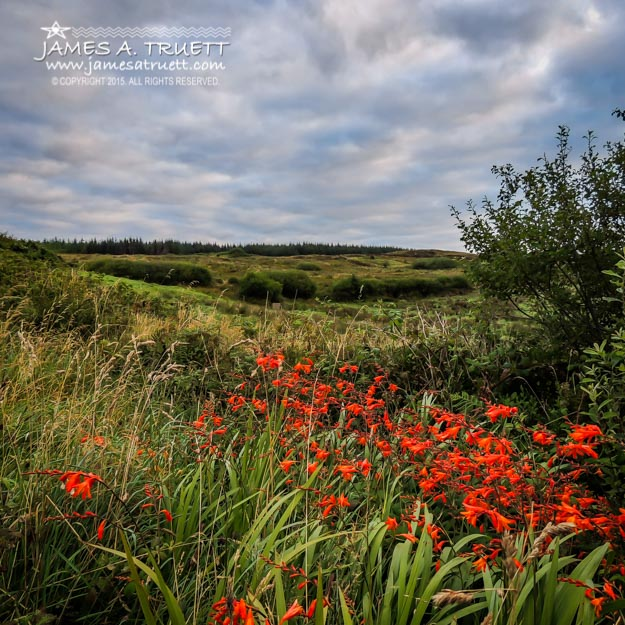 Splash of Summer Color in the County Clare Countryside