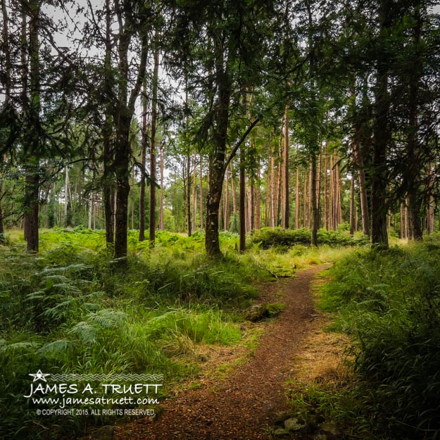Enchanted Forest at County Galway's Portumna Park