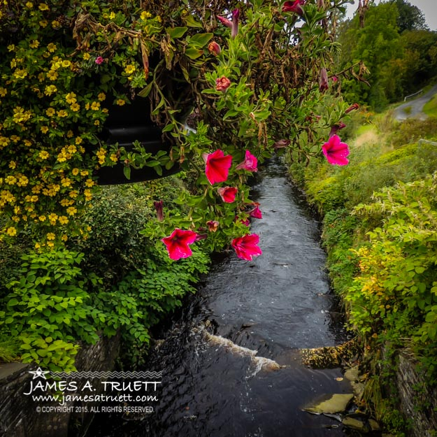 Hanging Flowers over County Clare's Owenslieve River