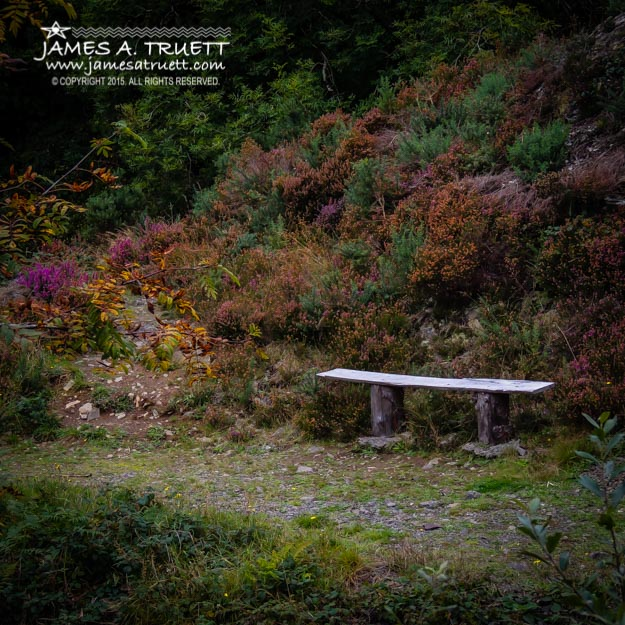 Rustic Bench in the Autumn Irish Countryside