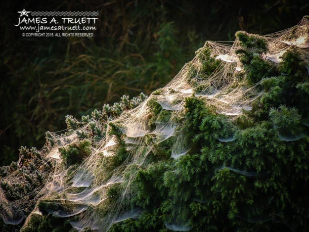 Spider Webs in Morning Irish Dew