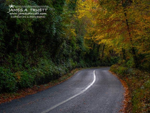 Rural Irish Road under Autumn canopy