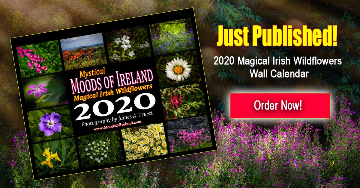 2020 Magical Irish Wildflowers Calendar