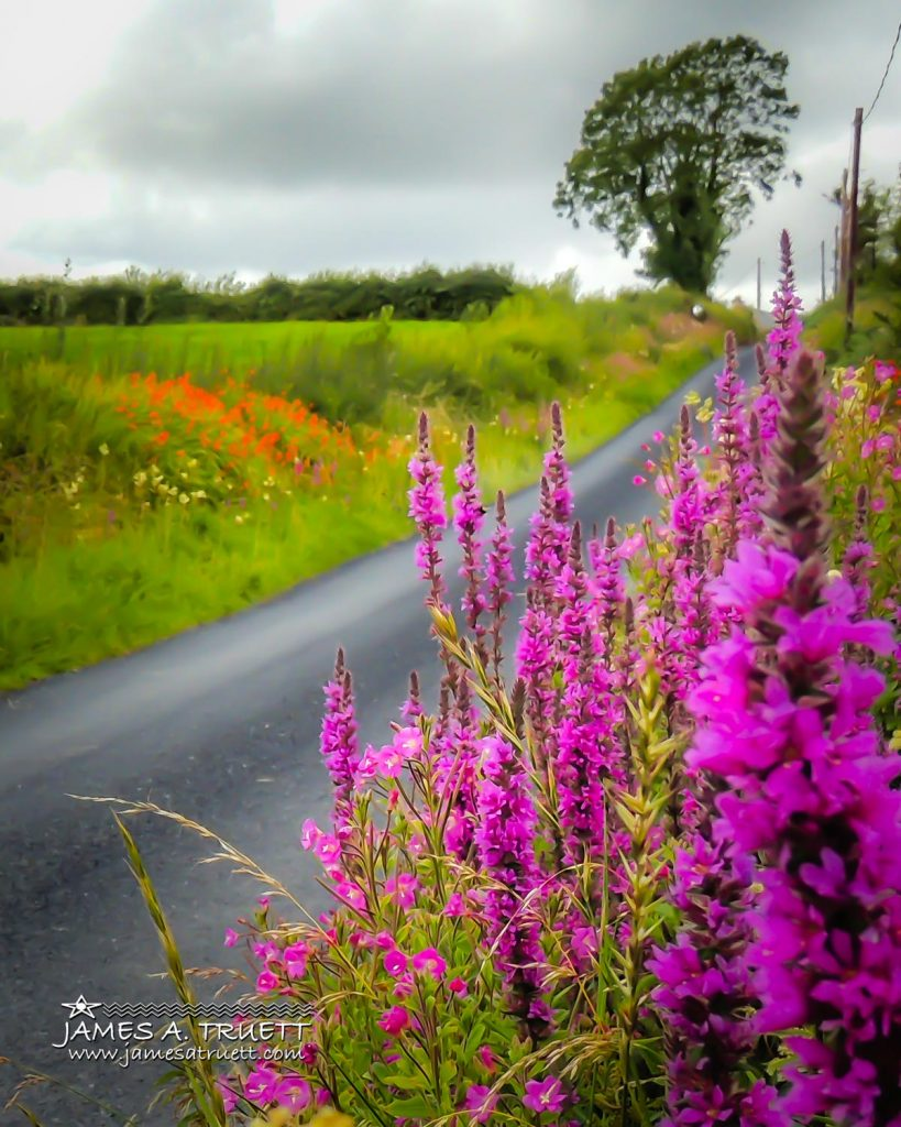 Wildflowers-lined Irish County Road