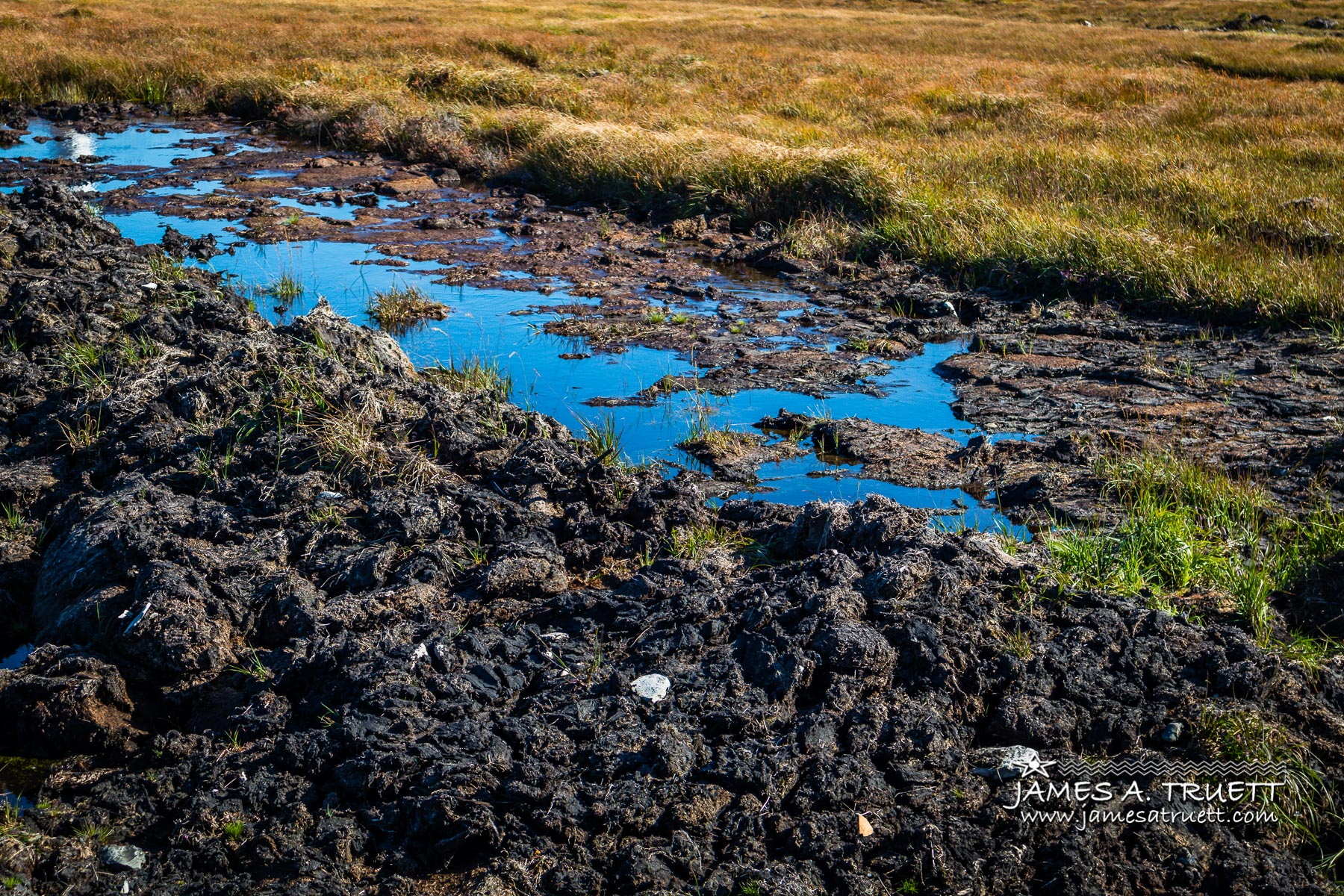 Blue sky reflects in the bog pool