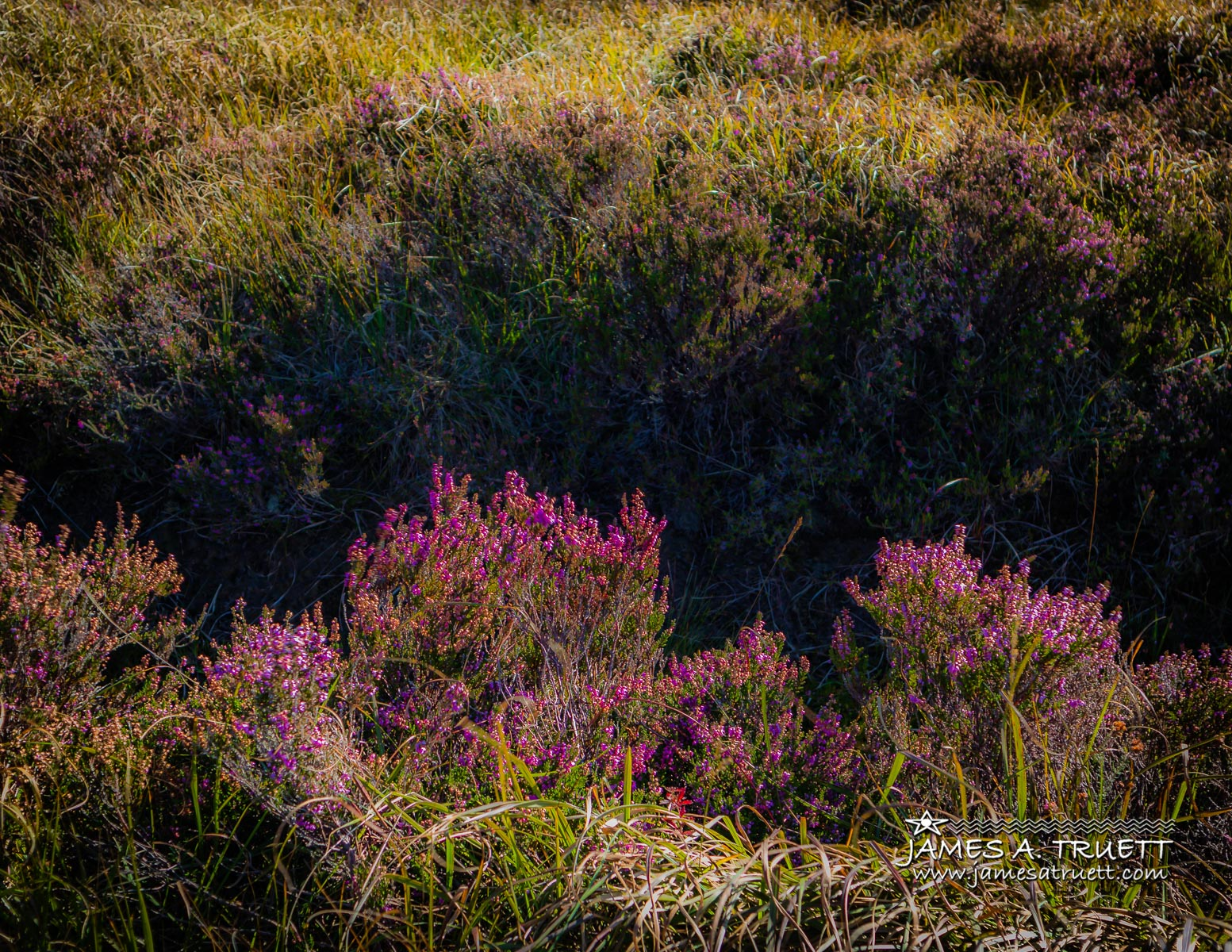 Flowers in the bog